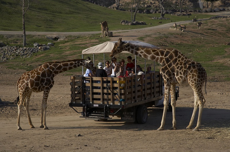 Wild Animal Park Safari em San Diego